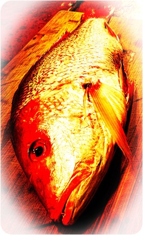 Impeccably fresh red snapper