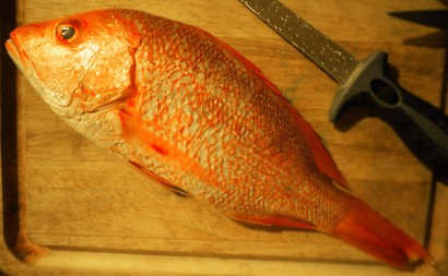 Impeccably fresh whole red snapper from the Gulf Coast, ready to be prepared for ceviche